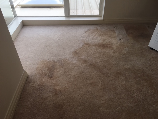 carpet-cleaning-before