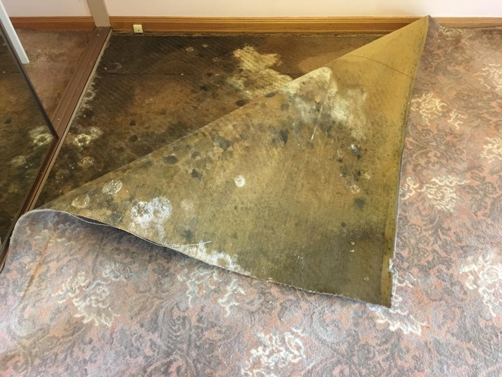 mould on a carpet