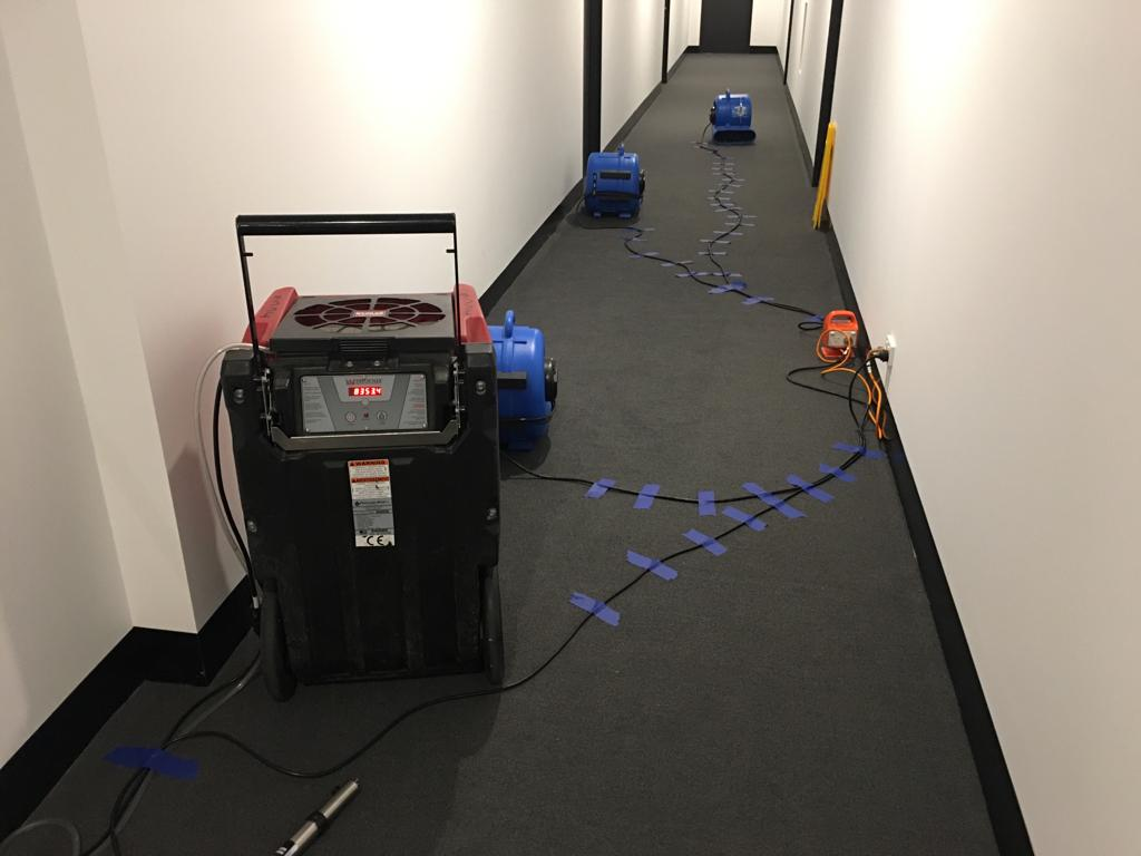 drying of a Polypropylene carpet in a common area on a multi-storey building