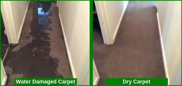 Water damaged carpet and dry carpet